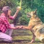 Köpek eğitiminde en önemli püf noktalar nelerdir?